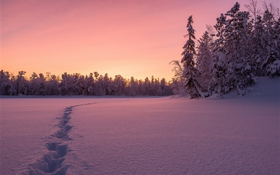 Wallpaper Winter, thick snow, trees, sunset