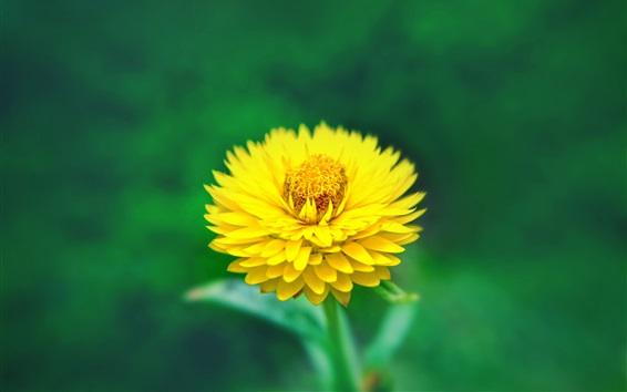 Обои Желтый цветок крупным планом, пестик, зеленый фон