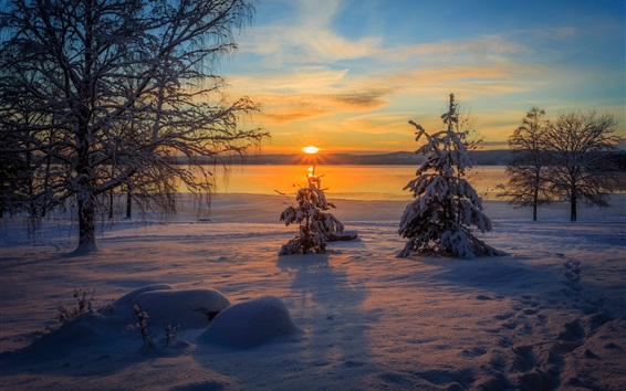 Fond d'écran Arvika, Suède, hiver, neige, Arbres, Coucher soleil