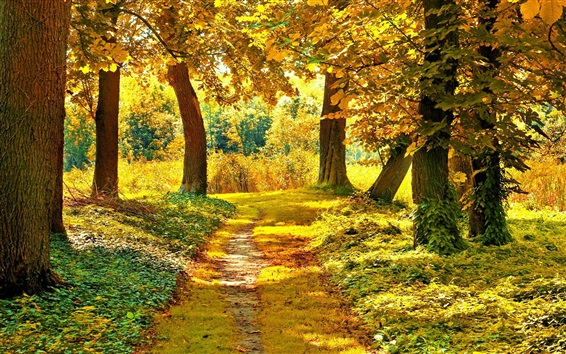 Wallpaper Autumn trees, path, grass, yellow leaves