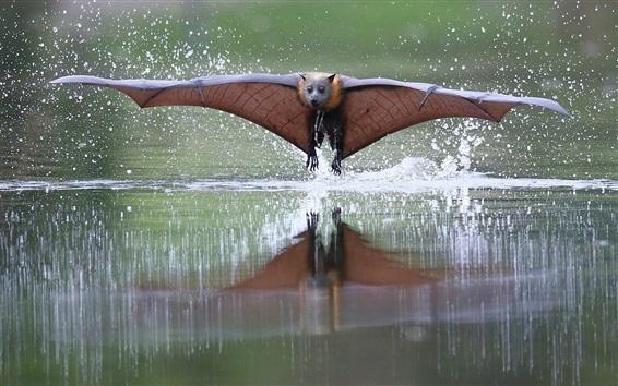 Wallpaper Bat flying, wings, water