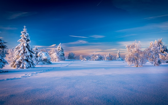Beautiful winter landscape, trees, spruce, snow Wallpaper Preview