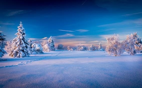 Wallpaper Beautiful winter landscape, trees, spruce, snow