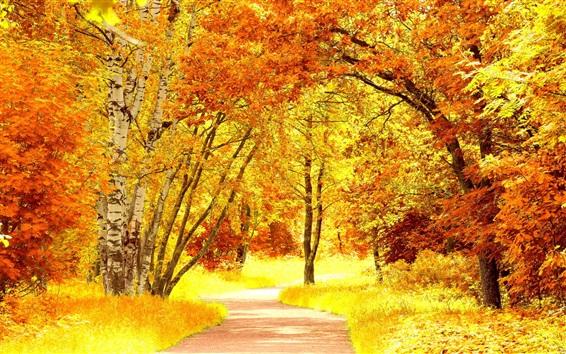 Papéis de Parede Birch floresta no outono, folhas amarelas