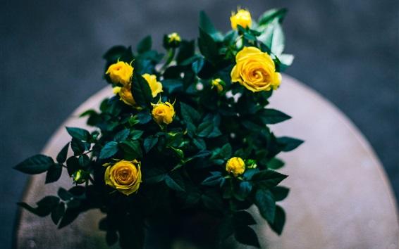 Fond d'écran Bouquet, roses jaunes