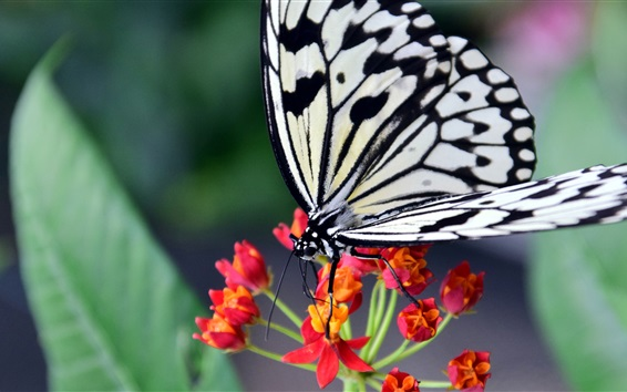 Wallpaper Butterfly, red flowers