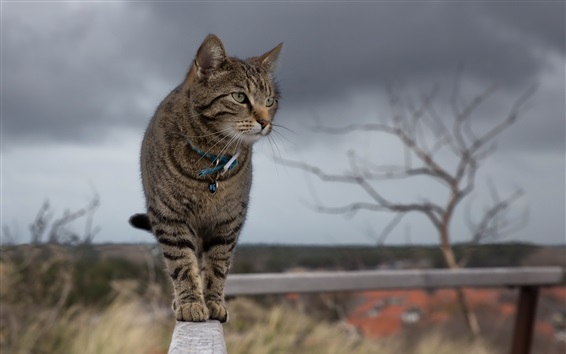 Wallpaper Cat standing on the fence top look around
