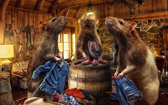 Wallpaper Creative pictures, rats, jeans, room