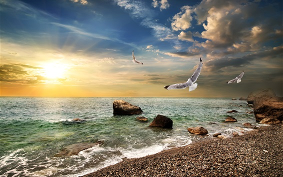 Wallpaper Crimea, sea, beach, coast, waves, seagulls, sunset