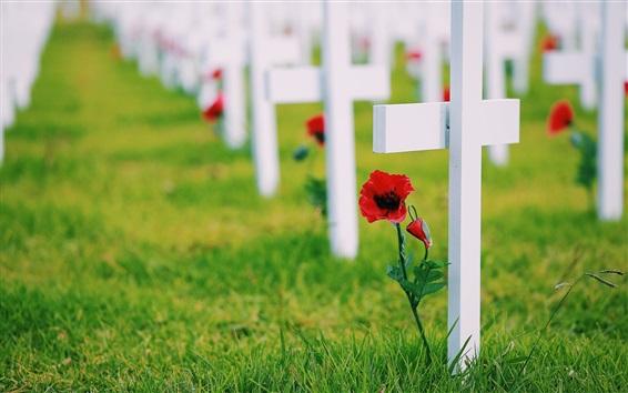 Fondos de pantalla Cruces, la memoria, la hierba