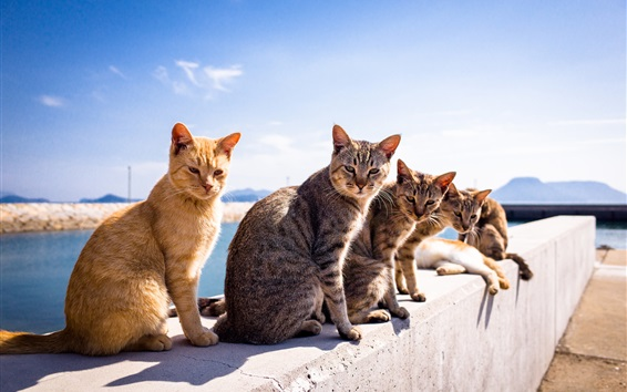 Wallpaper Cute cats under the sunshine