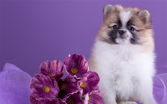 Wallpaper Cute dog and purple flowers