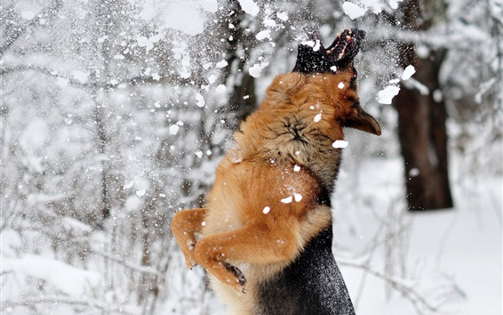 Wallpaper Dog play snow