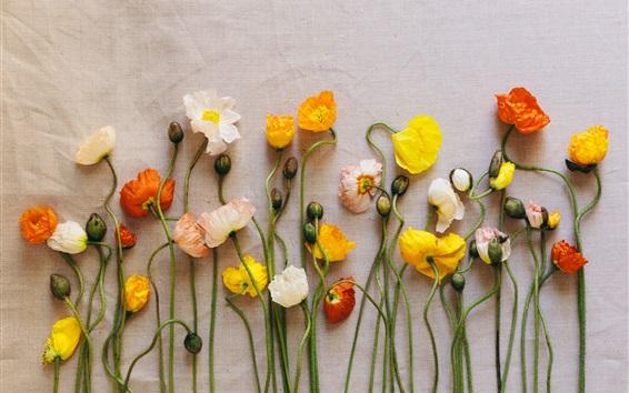 Обои Образцы цветов, маки