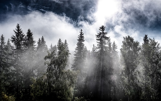 Wallpaper Forest, trees, sun rays, clouds