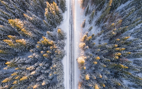 Wallpaper Forest, trees, top view, snow, road, winter