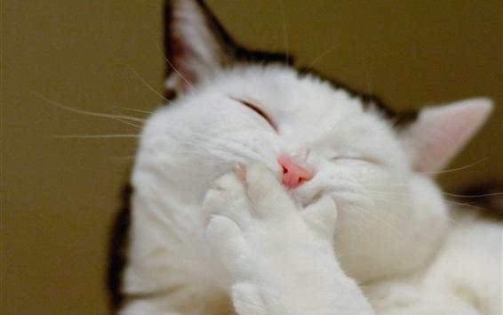 Papéis de Parede Gato engraçado, cara, pata