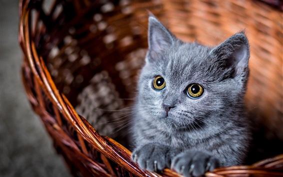 Papéis de Parede Olhar gatinho cinzento peludo em você