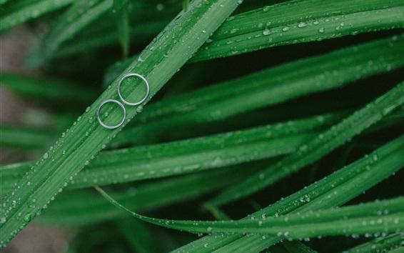 Fond d'écran Vert, herbe, rosée, Anneaux