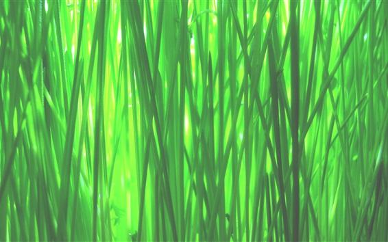Fond d'écran Vert, herbe, macro, photographie, ressort