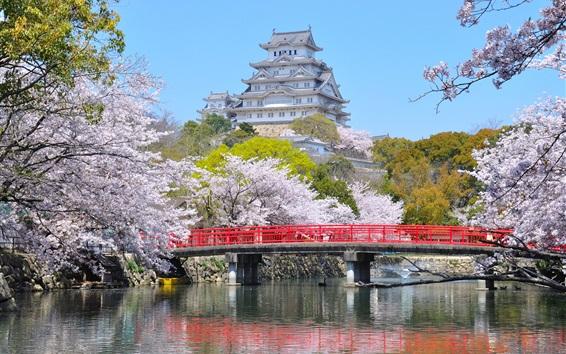 Fondos de pantalla Himeji ciudad, Japón, primavera, flores, puente, río