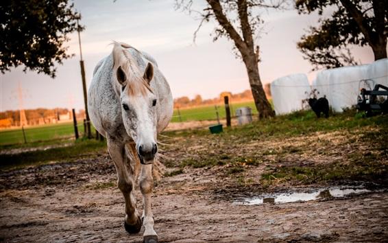 Обои Лошадь вид спереди, прогулка