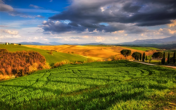 Wallpaper Italy, Tuscany, beautiful nature, fields, meadows, trees, sunny