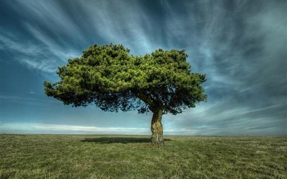 Fondos de pantalla Árbol solitario, hierba, nubes, cielo