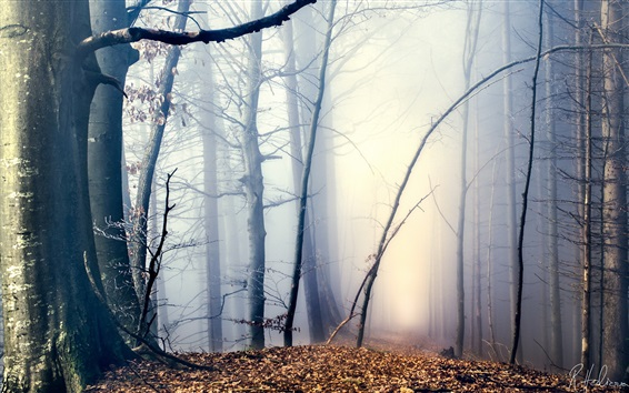 Wallpaper Morning, forest, trees, path, fog, autumn