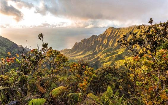 Обои Горы, кусты, облака, море, побережье, Гавайи, США