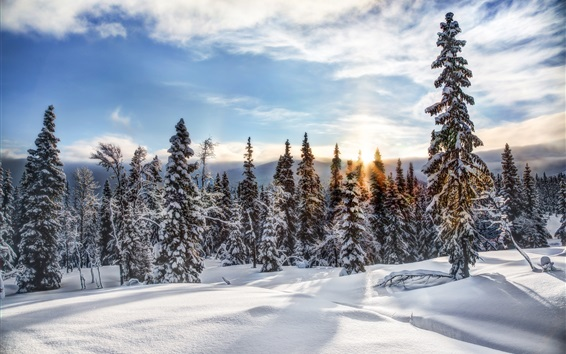 Wallpaper Norway, Trysil, winter, snow, trees, forest, sunset