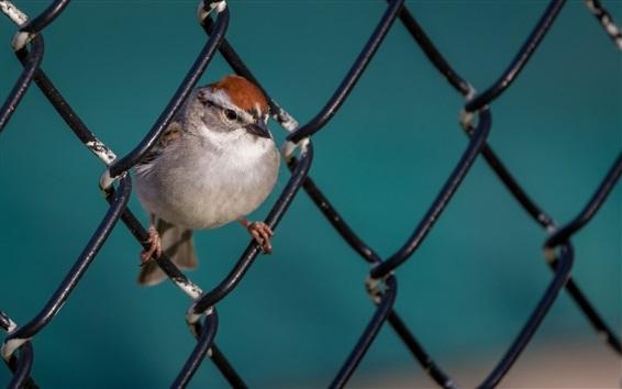 Wallpaper One bird, fence