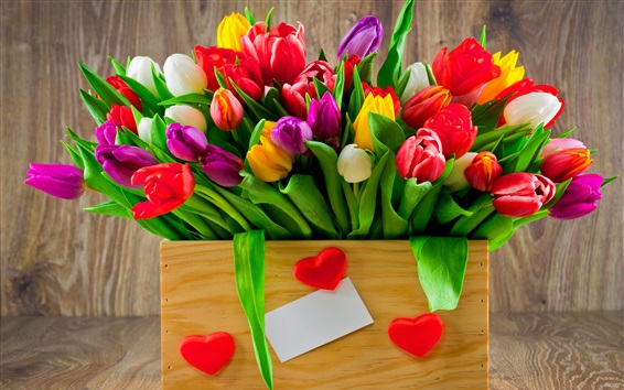 Wallpaper One box of tulip flowers, white red yellow pink, love hearts