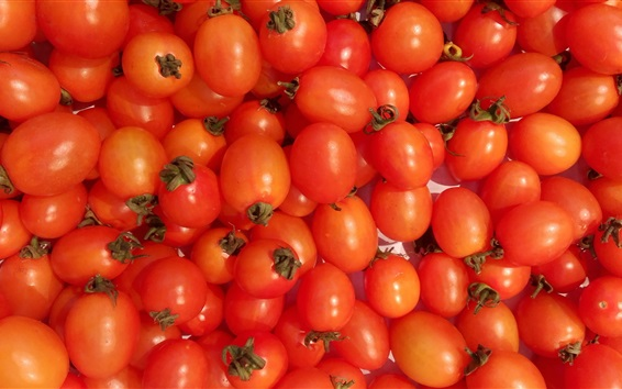 Wallpaper Orange mini tomatoes