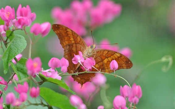 Wallpaper Pink flowers, butterfly, insect, blurry background
