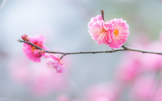 Wallpaper Pink peach flowers, twigs, spring