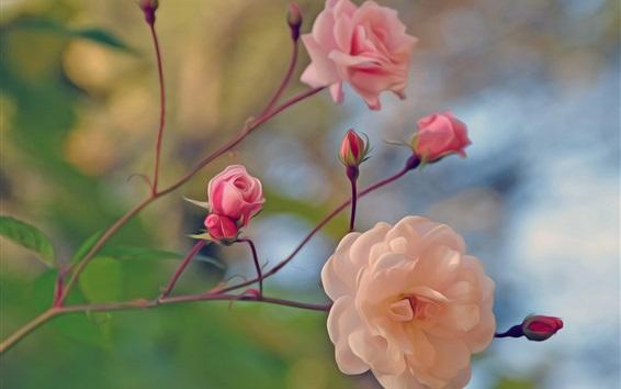 Wallpaper Pink rose, twigs, art style