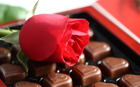 Wallpaper Red rose and chocolate candy