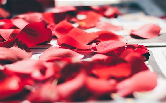 Wallpaper Red rose petals macro photography, romantic