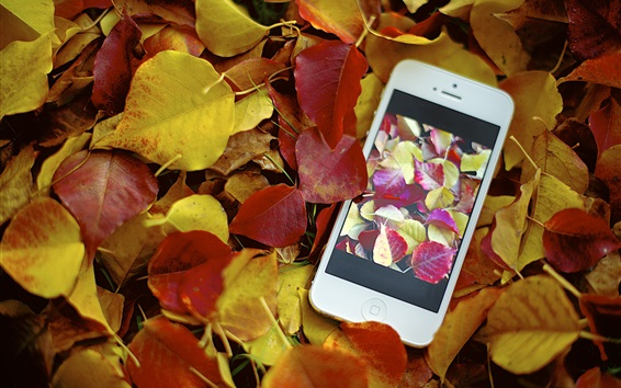 Wallpaper Red yellow leaves, autumn, iPhone