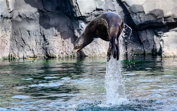 배경 화면 물 밖으로 뛰어 오르는 바다 사자