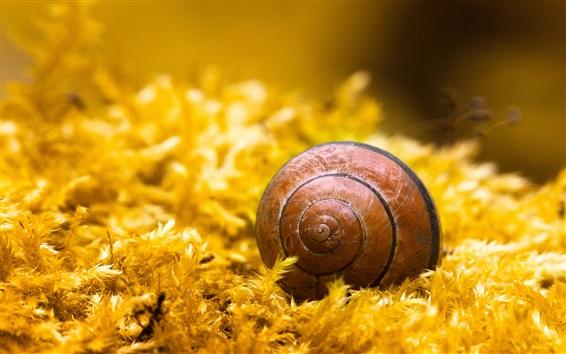 Fond d'écran Escargot, insecte, herbe jaune