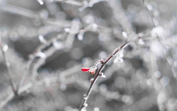 Wallpaper Snow, twigs, berries