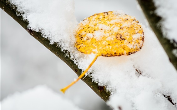 Wallpaper Snow, yellow leaf, winter