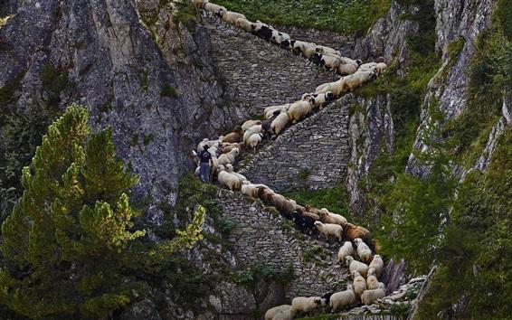 배경 화면 가파른 돌 계단, 양, 절벽