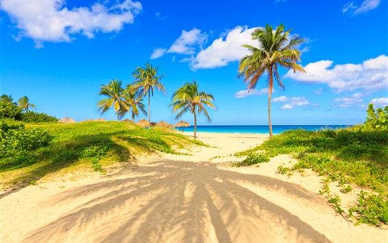 Обои Лето, тропики, пальмы, песок, море, пляж