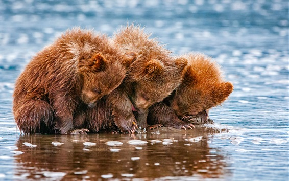 壁紙 3つのかわいいクマ、子、水