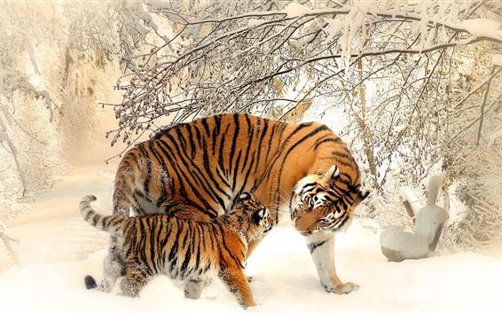 Papéis de Parede Tigres no inverno, neve, árvores, frio