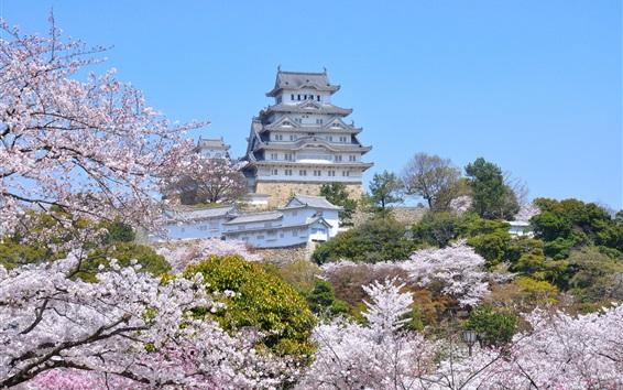 Wallpaper Travel to Himeji City, spring, sakura blossoms, Japan