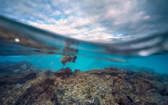 Papéis de Parede Tartaruga, submarinas, mar, água